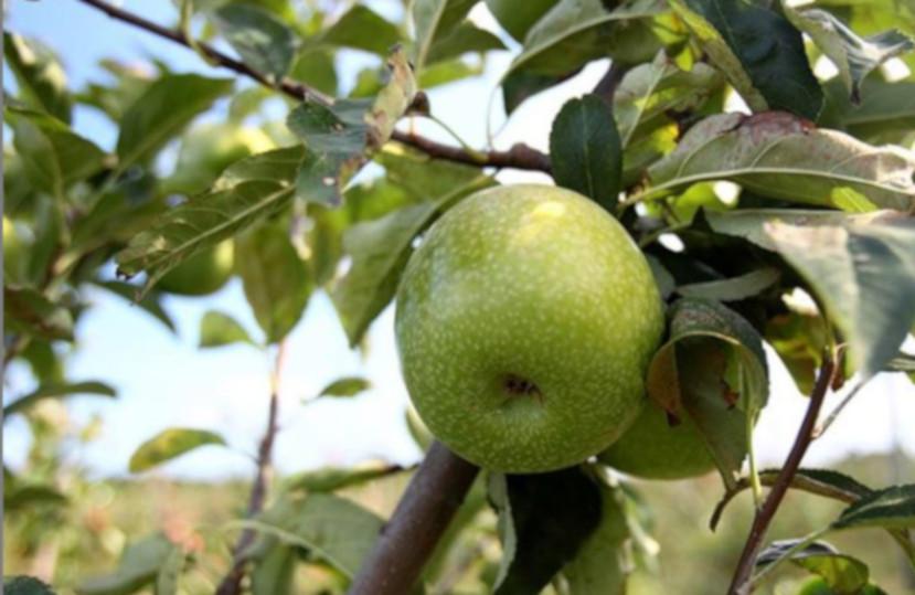 Oferta gastronómica (Torroella de Montgrí – L'Estartit) – Septiembre 2019